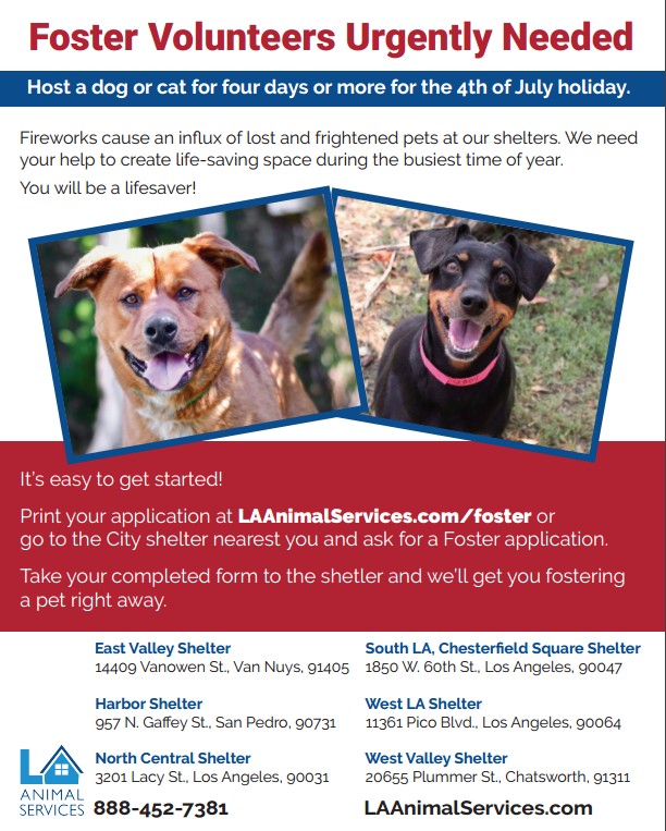 Foster Volunteers are Lifesavers, especially During the Fourth of July