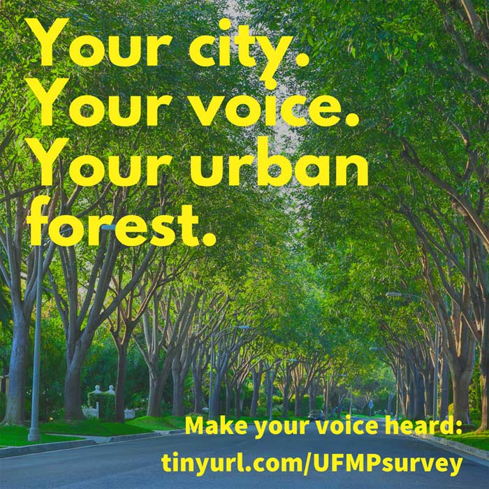 Urban forest survey