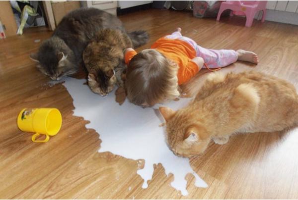 cats & kid spilled milk