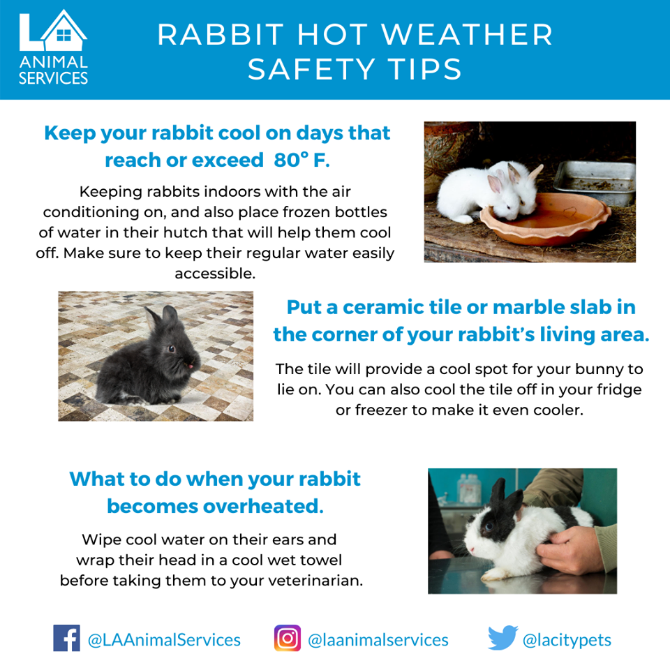 hot rabbits